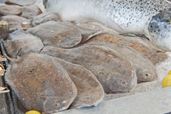 Collection of fresh plaice in seafood restaurant Stock Photography