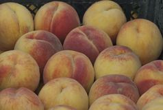 Collection of fresh ripe peach fruits Royalty Free Stock Photography
