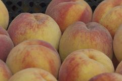 Collection of fresh ripe peach fruits Royalty Free Stock Images
