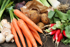 Collection of fresh vegetables Royalty Free Stock Images