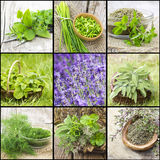 Collection of freshly harvested herbs stock images
