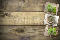 Collection of freshly harvested herbs royalty free stock image