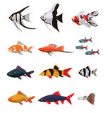 Collection of freshwater fishes. Vector illustration in flat style Stock Photos