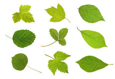 Collection fruit leaves Royalty Free Stock Photography
