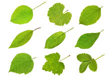 Collection fruit leaves Royalty Free Stock Image