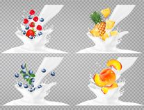 Collection of fruit in a milk splash. Stock Image