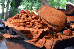 Collection of fruit and seeds food eaten by the indigenous Austr. Alian Yirrganydji Aboriginal people from the rainforests of Queensland, Australia Stock Image