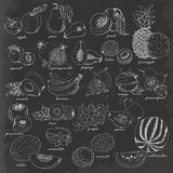 Collection of fruit in sketch style on dark background Stock Photography