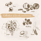 Collection of fruits and berries Stock Images