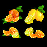 Collection of fruits. lemon food fruit citrus orange vector yellow fresh Stock Image