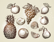 Collection fruits sketch. Hand-drawn elements such as apple, pineapple, pear, grapes, orange, lemon. Vector illustration Royalty Free Stock Photography