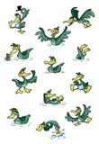 Collection of fun ducks Stock Photos