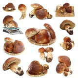 Collection of fungi porcini ready for cooking Royalty Free Stock Photo