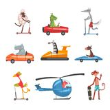 Collection of Funny Animal Characters Using Various Types of Vehicles, Rabbit, Dragon, Hippo, Zebra, Cow, Bird, Fox royalty free illustration