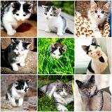 Collection of funny kitten Stock Photo