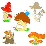 Collection of funny mushrooms. Vector mushroom characters. Isolated Stock Images