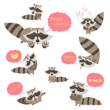 Collection of funny raccoons Stock Photo