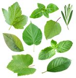 Collection of garden leaves Stock Photos