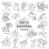 Collection of garden and wild berries in sketch style Royalty Free Stock Image