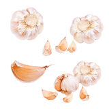 Collection of garlic Stock Image