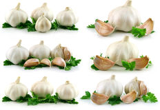 Collection of Garlic Vegetable with Green Parsley Royalty Free Stock Images