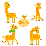 Collection Giraffe In Different Poses. Funny Characters Set.  Royalty Free Stock Photography