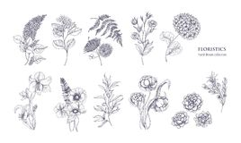 Collection of gorgeous floristic flowers and wild flowering plants hand drawn with black contour lines on white. Background. Bundle of elegant natural stock illustration