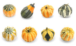 Collection of gourd pumpkins Stock Photo