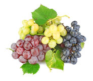 Collection of grape clusters Royalty Free Stock Photo