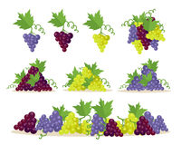 Collection of Grapes Sorts. Fruit for Wine Making. Stock Images