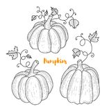Collection of graphic hand drawn pumkins for your design