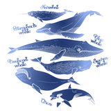 Collection of graphic whales royalty free illustration