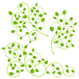 Collection of green branches Royalty Free Stock Photos