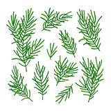 Collection green branches of a Christmas tree isolated on white background. Vector illustration. Royalty Free Stock Photo