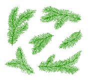 Collection green branches of a Christmas tree isolated on white background.  Royalty Free Stock Photos