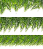 Collection of green coconut leaves border Stock Images