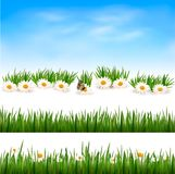 Collection of green grass backgrounds. Royalty Free Stock Photo