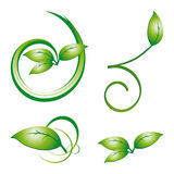 Collection of green leaves Stock Image