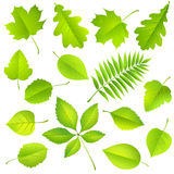 Collection of green leaves Royalty Free Stock Images