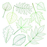 Collection of green leaves Stock Photo