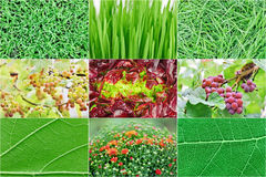 Collection of green nature plant backgrounds Stock Photo