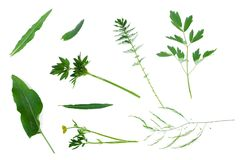 Green leaves collection. royalty free stock photos