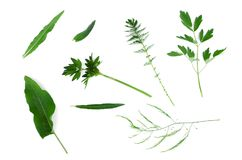 Green leaves collection. stock photography