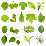 Collection green tree leaves. Stock Photography