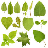 Collection green tree leaves, high resolution. Stock Photos
