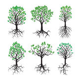 Collection of Green Tree and Roots Royalty Free Stock Image