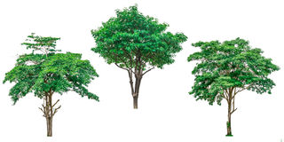 Collection of green trees isolated on white background. Royalty Free Stock Photo