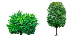 Collection of green trees isolated on white background. Stock Photo