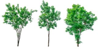 Collection of green trees isolated on white background. Stock Photos