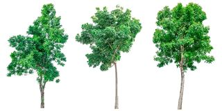 Collection of green trees isolated on white background. Stock Photography
